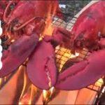 【ヒロシキャンプ】満開の桜の下、オマール海老を焼きましたスペシャル
