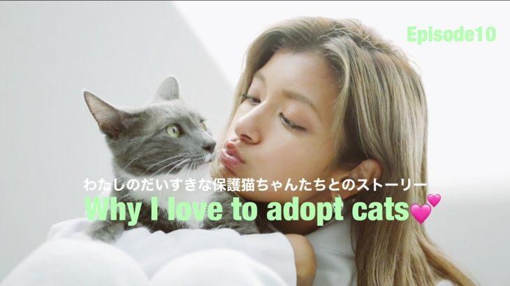 ローラの愛するねこちゃんたちとのストーリー😢💕『Why I love to adopt cats』