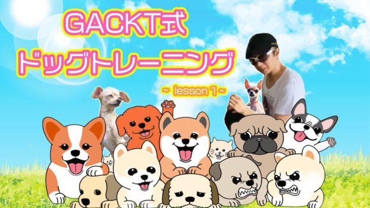 GACKT式 ドッグトレーニング lesson1