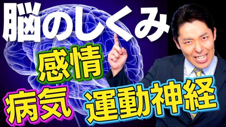 【脳②】感情の生まれ方・運動神経の仕組み・恐ろしい脳の病気