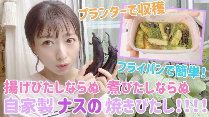 【収穫野菜で1品】自家製ナスの焼きびたし