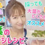 【大量消費】大葉のアレンジレシピ