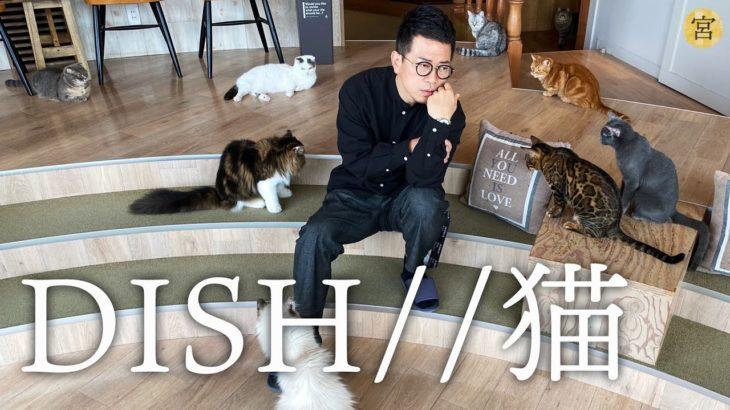 猫 / DISH// (カバー)【110万人突破記念】