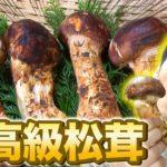 【秋の味覚】最高級松茸を使って炊き込みご飯&焼き松茸を作ってみた!【料理】