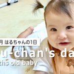 【生後6カ月】はるちゃんの1日