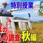 特別授業「田んぼの生きもの調査」秋編
