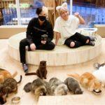 猫アレルギーのヒカルと猫カフェデートしてきたよw【彼女目線】