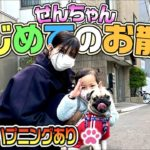 【初体験】せんちゃんはじめてのお散歩〜コロッケと大ハシャギ〜