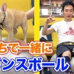【おうち時間】クルミちゃんとバランスボールでトレーニング!