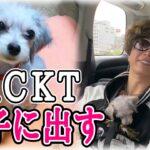 GACKTが愛犬を里子に出しました。