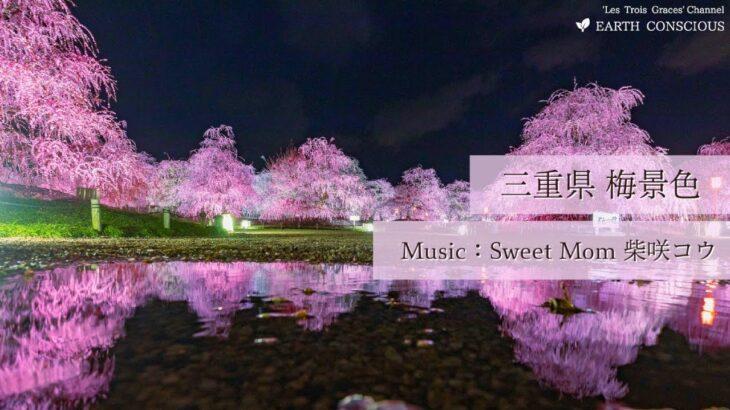 【三重県 梅景色】いなべ市梅林公園 鈴鹿の森庭園 – Sharing Trip #5 –