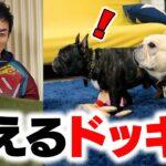 【ドッキリ】愛犬に消えるドッキリ仕掛けてみたらまさかの反応!?