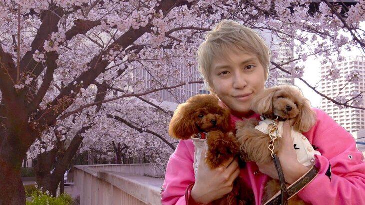 【お花見】愛しのエマ&ティファと目黒川のお花見デートしてきたら最高だった