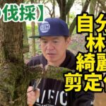 【枝の伐採】自分の林を綺麗に剪定作業!