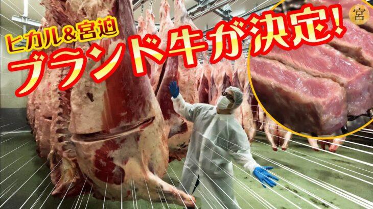 ヒカル&宮迫のブランド牛が決まりました【日本一の焼肉店】